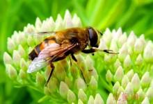 蜜蜂采集蜂蜜的详细过程,又被震撼了-优蜜网
