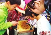 蜂蜜是从蜂窝里甩出来的-优蜜网
