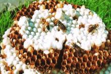 来自洛阳全宝山森林里的野蜂蜜-优蜜网