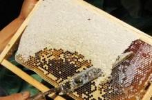 养蜂加电商脱贫又致富-优蜜网