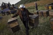 濮阳养蜂人数十箱蜜蜂疑遭人下毒-优蜜网