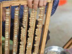 蜂王浆是怎么来的怎么产生的-有米网络